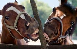 Sonrisa del caballo Imagen de archivo