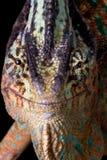 Sonrisa del camaleón Fotografía de archivo