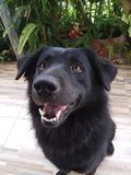 Sonrisa del perro Imágenes de archivo libres de regalías