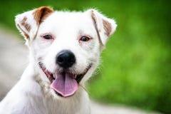 Sonrisa del perro Imagenes de archivo