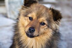 Sonrisa del perro Fotografía de archivo