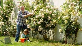 Sonsonen och farfadern spenderar tid i fruktträdgården Plantera för sonson och för farfar Hans tycker om samtal till farfadern stock video