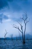 Sont morts les arbres Photographie stock