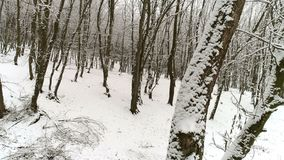 Sonwy Trees in Winter Day. Snowy trees in winter day, drone shot stock video footage