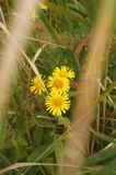 Wildflowers of Primorye stock image