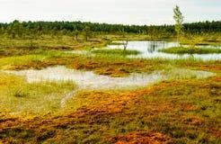Sooma Estonia della tundra fotografia stock