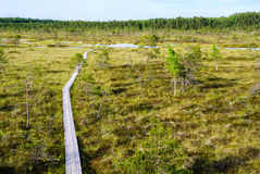 Sooma nationalpark Estland Royaltyfri Fotografi
