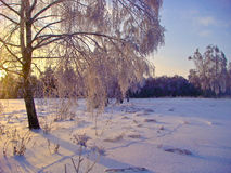 Soon New year. Winter day, all the trees are covered with frost. Snow someone traces stock photos
