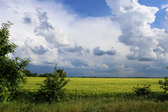 Soon there will be heavy rain. On the horizon there are dark clouds. Appeared on the horizon storm clouds, while the foreground is still light  , and the green Royalty Free Stock Photography
