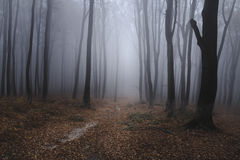 Soooky foggy forest trail. Gloomy dark autumn day. Filtered image Stock Images