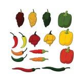 Soort Spaanse pepers stock afbeelding