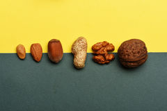 Soorten noten op kleurrijke achtergrond Royalty-vrije Stock Afbeelding