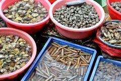 Soorten zeeschelp in markt Stock Afbeeldingen