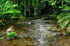The soothing creek trickles within a tropical biological corridor in Costa Rica. royalty free stock images