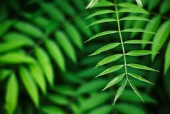 Soothing green leaves background, nature beauty. Of forest leaves in details Royalty Free Stock Photography