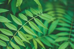 Soothing green leaves background, nature beauty. With detail in each leaf, different green tone Royalty Free Stock Photography