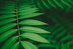 Soothing green leaves background, nature beauty. For background or wallpaper Stock Images