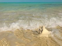 Waves wash up on a conch shell in Turks and Caicos stock photo