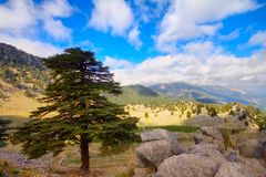 Soothing mountain summer wonderful view. Highland pine forest and  voices of birds Royalty Free Stock Photography
