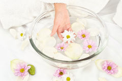 Soothing petal bath. Spa composition, woman's hand holding flower Royalty Free Stock Photos