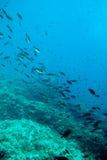 Sopa dos peixes. Foto de Stock
