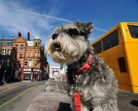 Sopa i Manchester Royaltyfri Foto