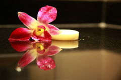 Sopa and orchid Stock Image