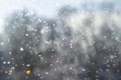 Sopa snön Arkivfoto