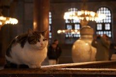 sophia της Κωνσταντινούπολης hagia γατών στοκ φωτογραφία