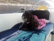 Sophie Sailor Dog op Horloge royalty-vrije stock afbeelding