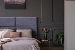 Sophisticated pastel bedroom interior. With tulips next to bed against grey wall with molding and poster concept royalty free stock image