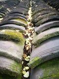 Sophora flower lying on the bricks royalty free stock image