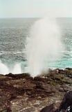 Sopladura de las islas de las Islas Gal3apagos Fotografía de archivo libre de regalías