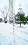 Sople w zimie Zdjęcia Royalty Free