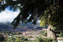 Sopleniec tworzył na jedlinowym drzewie z górzystą wioską zamazującą w tle zdjęcie royalty free