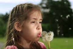 Soplo de la muchacha en el diente de león Fotos de archivo libres de regalías