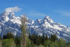 Soplo magnífico de la nieve de la cumbre de Teton Fotos de archivo libres de regalías