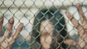 Soplos en la cerca de la malla con las manos para mujer La muchacha enojada bate las manos en una cerca de la rejilla almacen de metraje de vídeo