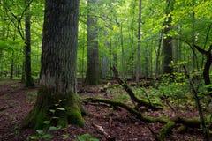 Soporte de hojas caducas en verano con los árboles quebrados Imagen de archivo