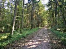 Soporte de hojas caducas otoñal de tierra de la travesía de camino Imagen de archivo libre de regalías