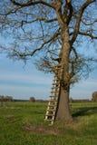 Soporte de la caja en un árbol Foto de archivo