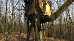 Soporte de la caza de la caja en el bosque almacen de video