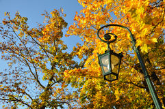 Soporte de la lámpara, bosque amarillo del arce con el cielo azul Fotos de archivo libres de regalías