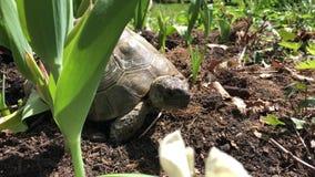 Soporte de la tortuga en el sol en una refrigeración del jardín almacen de metraje de vídeo