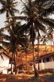 Soporte de las casas en una selva tropical entre las palmeras Foto de archivo libre de regalías