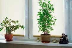 Soporte de las plantas interiores en el alféizar foto de archivo