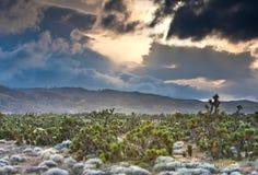 Soporte de los árboles de Joshua en el valle del antílope Imágenes de archivo libres de regalías