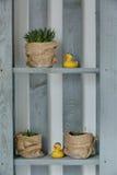 Soporte de madera con las plantas y los juguetes Imagen de archivo libre de regalías