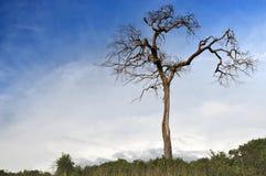 Soporte del árbol de la muerte solamente Foto de archivo