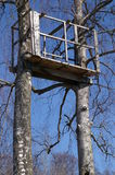 Soporte del árbol en árboles de abedul   Imágenes de archivo libres de regalías